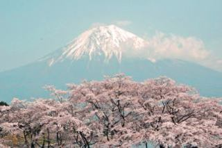 Fuji_sakura2_2